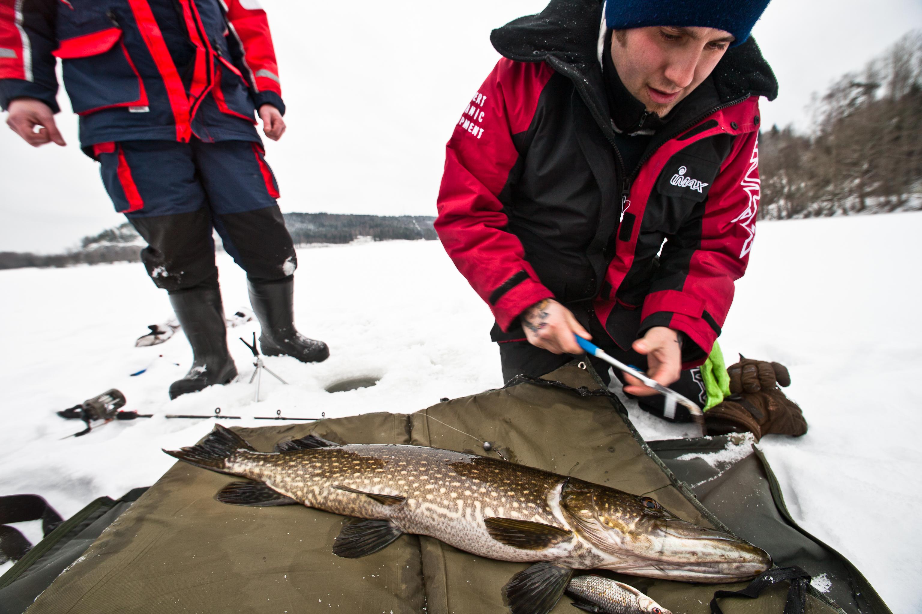 Hecht aus der schwedischen Provinz Dalsland. Gefangen auf einen Köderfisch beim Eisangeln.